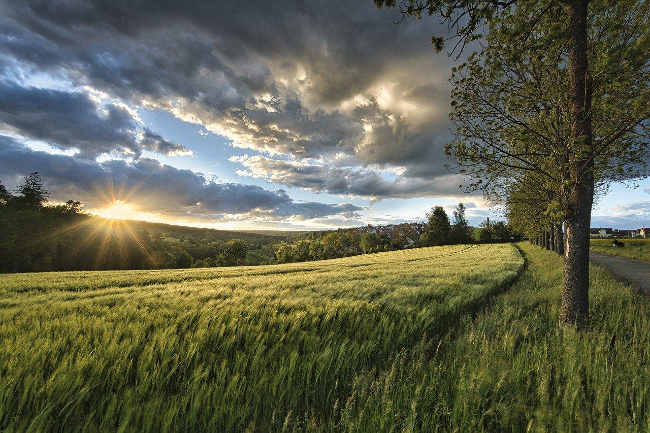 sunset, meadow, grass-6344387.jpg